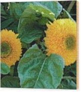Sunflower (helianthus Annuus Tuberosus) Wood Print