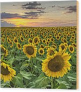 Sunflower Images - A Field Of Golden Texas Wildflowers Wood Print