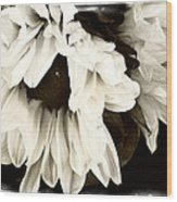 Sunflower In Black And White 1 Wood Print