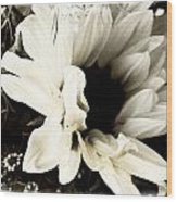 Sunflower In Black And White 3 Wood Print by Tanya Jacobson-Smith