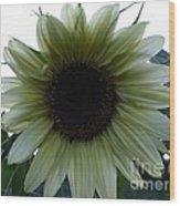 Sunflower In Light Wood Print