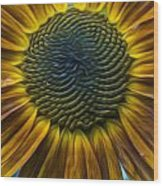Sunflower In Rain Wood Print