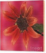 Sunflower In Red Wood Print