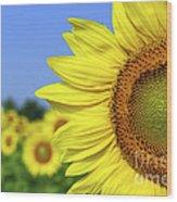 Sunflower In Sunflower Field Wood Print