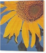 Sunflower In The Corner Wood Print