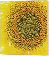 Sunflower In The Summer Sun Wood Print