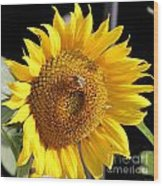 Sunflower-jp2437 Wood Print