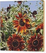 Sunflower Layers Wood Print by Kerri Mortenson