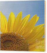 Sunflower Looking Up Wood Print