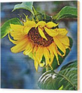 Sunflower Magic I Wood Print