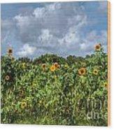 Sunflower Maze Wood Print
