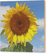 Sunflower Nirvana 30 Wood Print