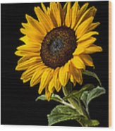 Sunflower Number 2 Wood Print