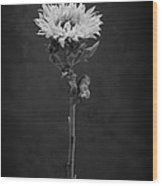 Sunflower Number 5 B W Wood Print