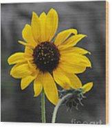 Sunflower On Gray Wood Print