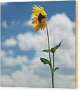 Sunflower On Route 66 Wood Print