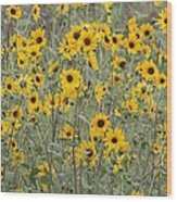 Sunflower Patch On The Hill Wood Print by Tom Janca