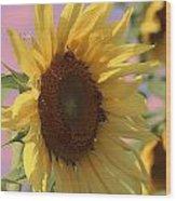 Sunflower Pop Wood Print
