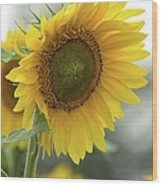 Sunflower Portrait Wood Print