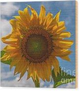 Sunflower Power Wood Print