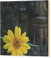 Sunflower Power Wood Print