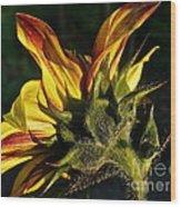 Sunflower Profile Wood Print