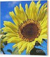 Sunflower Reaching For The Sun Wood Print