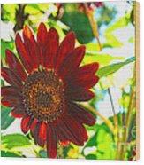Sunflower - Red Blazer - Luther Fine  Art Wood Print