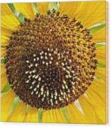 Sunflower Reproductive Center Wood Print