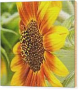 Sunflower Side Portrait Wood Print