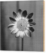 Sunflower Single Wood Print