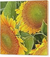 Sunflower Smiles Wood Print