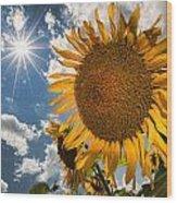 Sunflower Study 2 Wood Print
