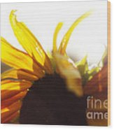 Sunflower Sunlight Wood Print