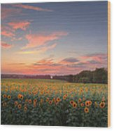 Sunflower Sunset Wood Print by Bill Wakeley