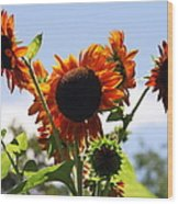 Sunflower Symphony Wood Print by Karen Wiles