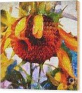Sunflower Tender Wood Print