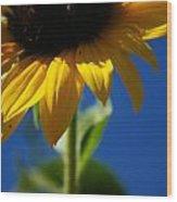 Sunflower Three Wood Print