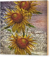 Sunflower Trio Wood Print