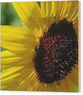 Sunflower Two Wood Print