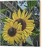 Sunflower Under The Gables Wood Print