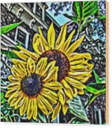 Sunflower Under The Gables Too Wood Print