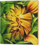 Sunflower Volunteer Wood Print