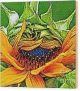 Sunflower Volunteer Half Bloom Wood Print