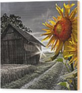 Sunflower Watch Wood Print
