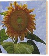 Sunflower With Busy Bees Wood Print
