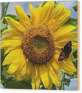 Sunflower With Butterfly Wood Print