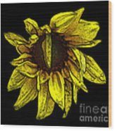 Sunflower With Contours Effect Wood Print