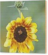 Sunflower With Honey Bee. Wood Print