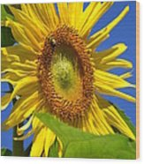 Sunflower With Honeybee Wood Print